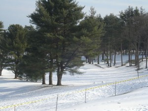 Wellesley Country Club sledding