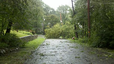 Wellesley tree and wires down hurricane irene