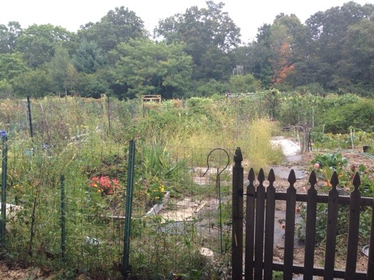 wellesley community garden
