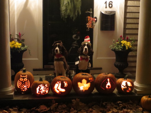In addition to the Red Sox pumpkin, Hudson  the Springer Spaniel (shown with pal Stanley) gets a carving devoted to him