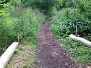 Fuller Brook Park restoration underway