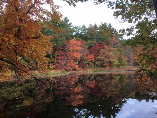 charles river foliage wellesley