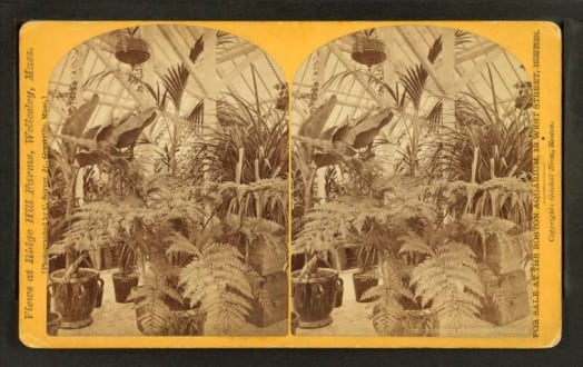 nypl.digitalcollections.510d47e0-7d2c-a3d9-e040-e00a18064a99.001.w