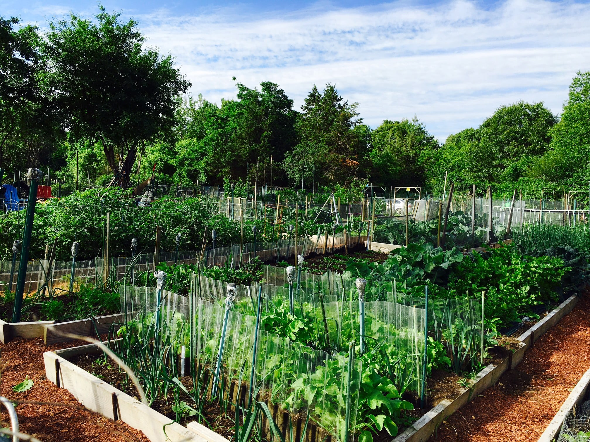 North 40 plot, Wellesley, late Spring