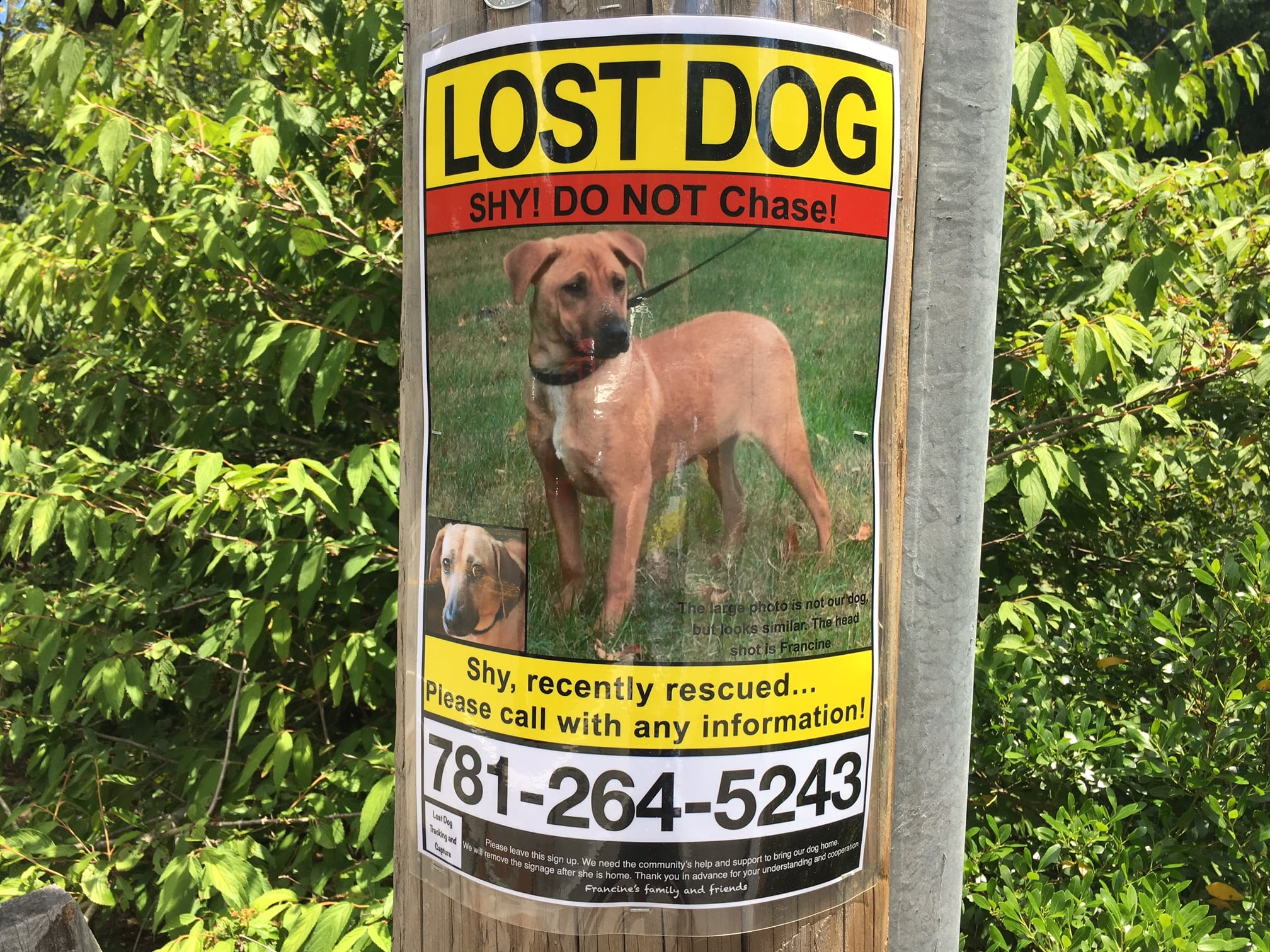 Lost dog, Wellesley