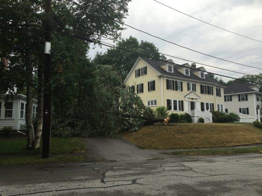 This tree fortunately spared the house, cars and wires on Ingraham Roa