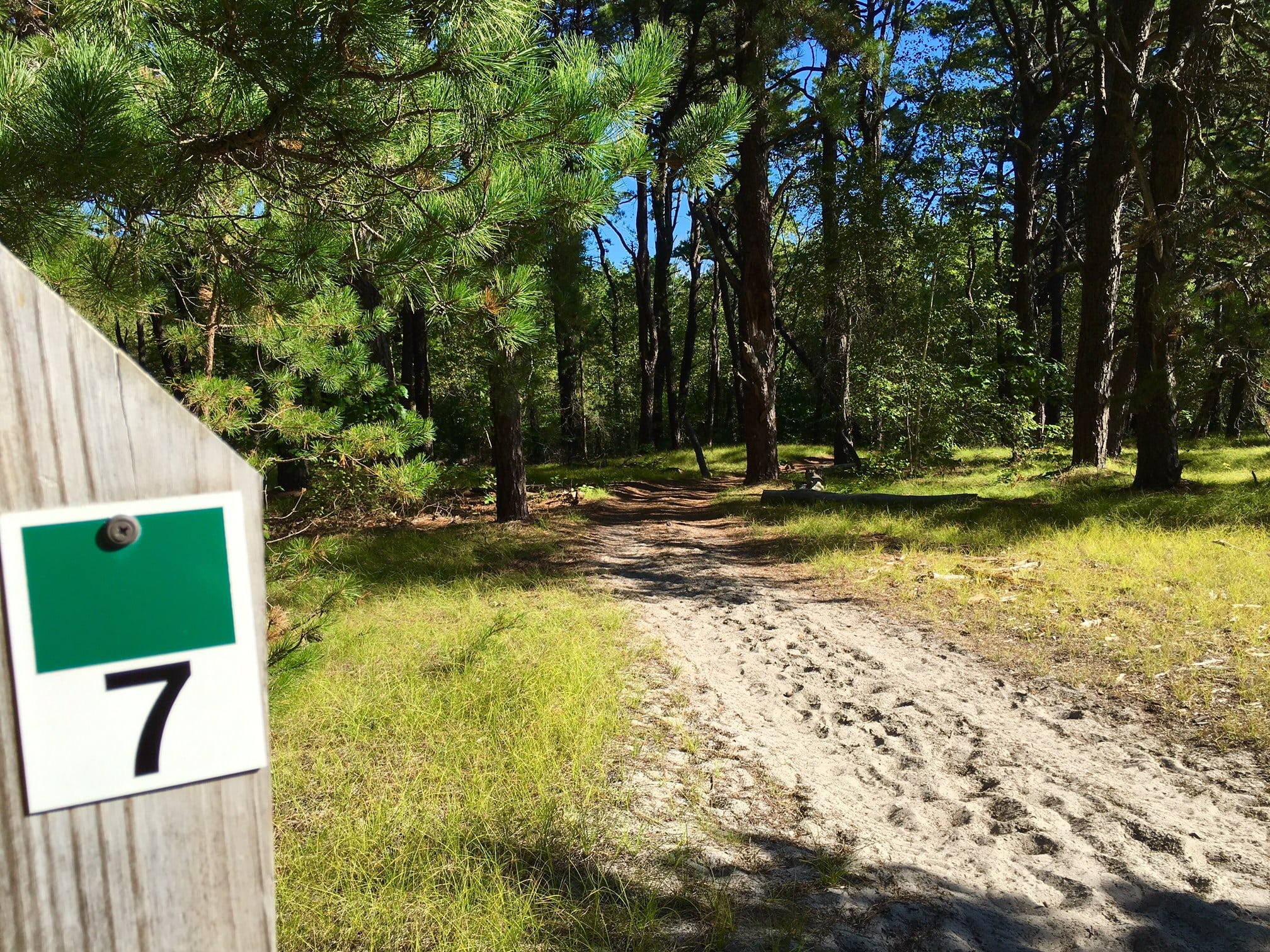 Keep following the numbered posts down. At Number 7 will lead you through a pine forest.