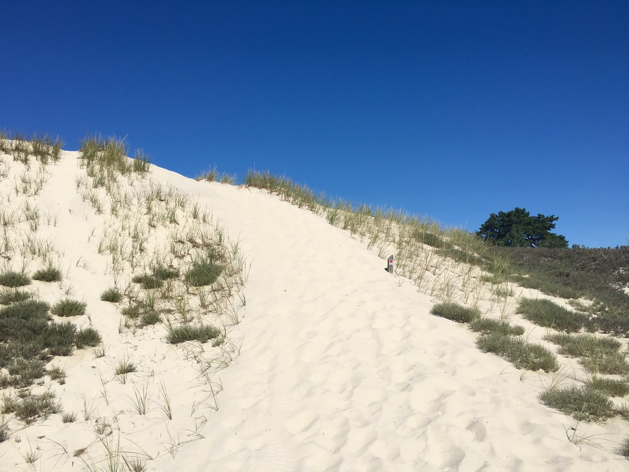 At post 22, you get to walk down a dune. After a lifetime of having it drummed into me that I must never EVER walk on the dunes, I was almost unable to do it. I dug deep, overcame mu early indoctrination, and did it.