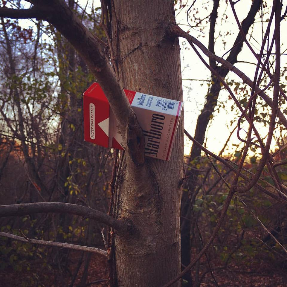 Wellesley Centennial Park, cigarette tree