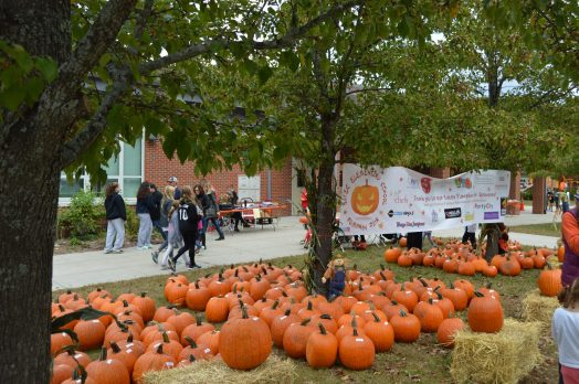 wellesley bates pumpkin fair pumpkins