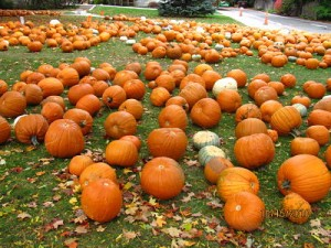 Wellesley Hills Congregational Church pumpkin patch