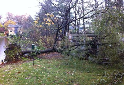 Hurricane Sandy, tree down, Pickerel Road