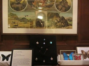 Denton Butterflies & Jewelry, Wellesley Historical Society