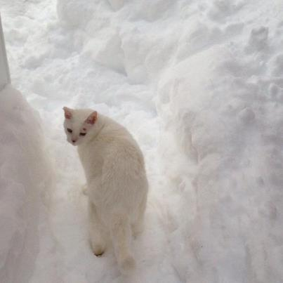 Polar Kitty