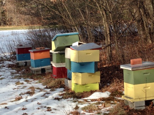 bee hives wellesley college