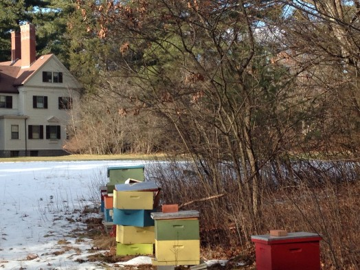wellesley bee hives