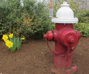 Wellesley hydrant