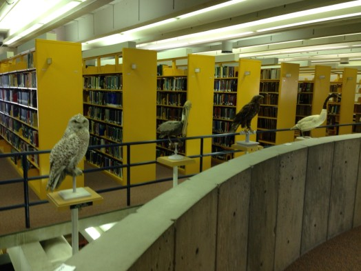 Birds at Wellesley College science library