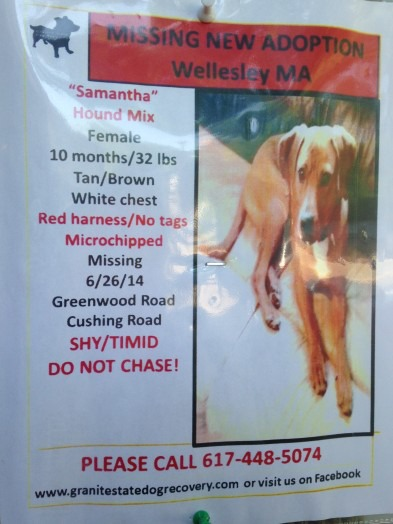 missing dog samanta wellesley
