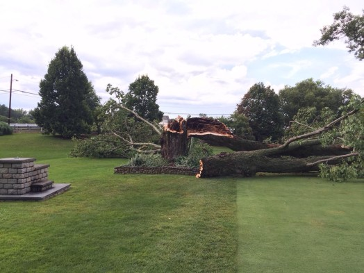 Tree down Wellesley country club