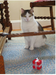Wellesley cat, Aimee, needs home