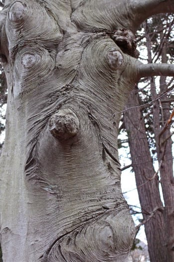 wellesley college face tree