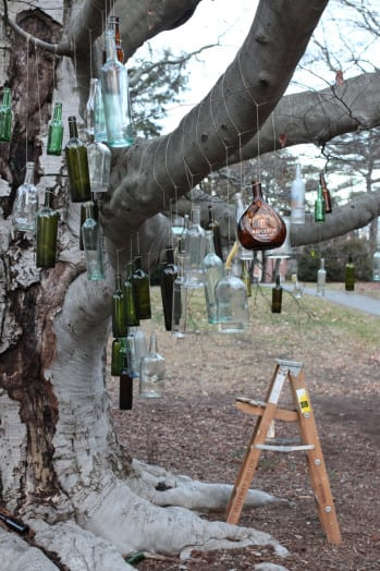 bottle tree wellesley