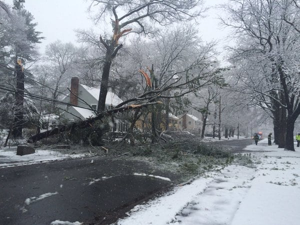 Wellesley police tweeted out this picture of a fallen tree on Mayo Rd.