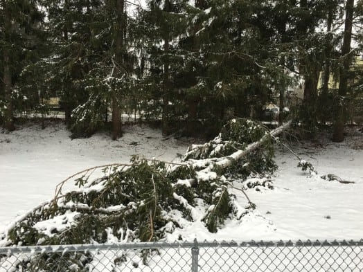 wellesley track tree down