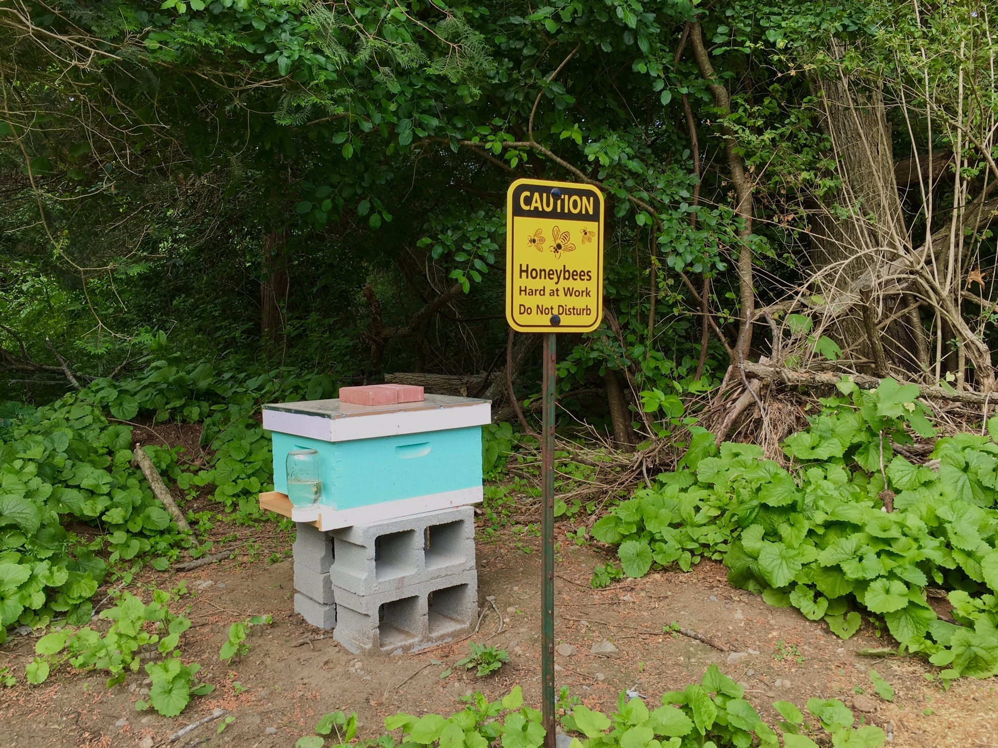 Bee hive, North 40, Spring 2016