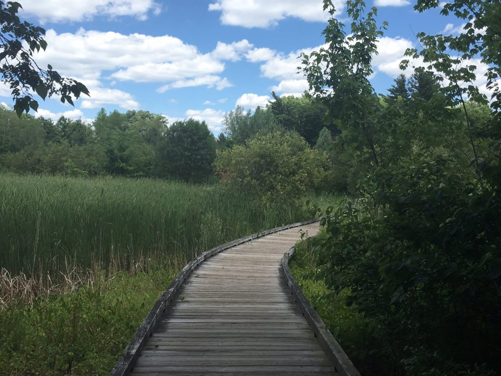 Lake Waban boardwalk, Wellesley, Summer 2016