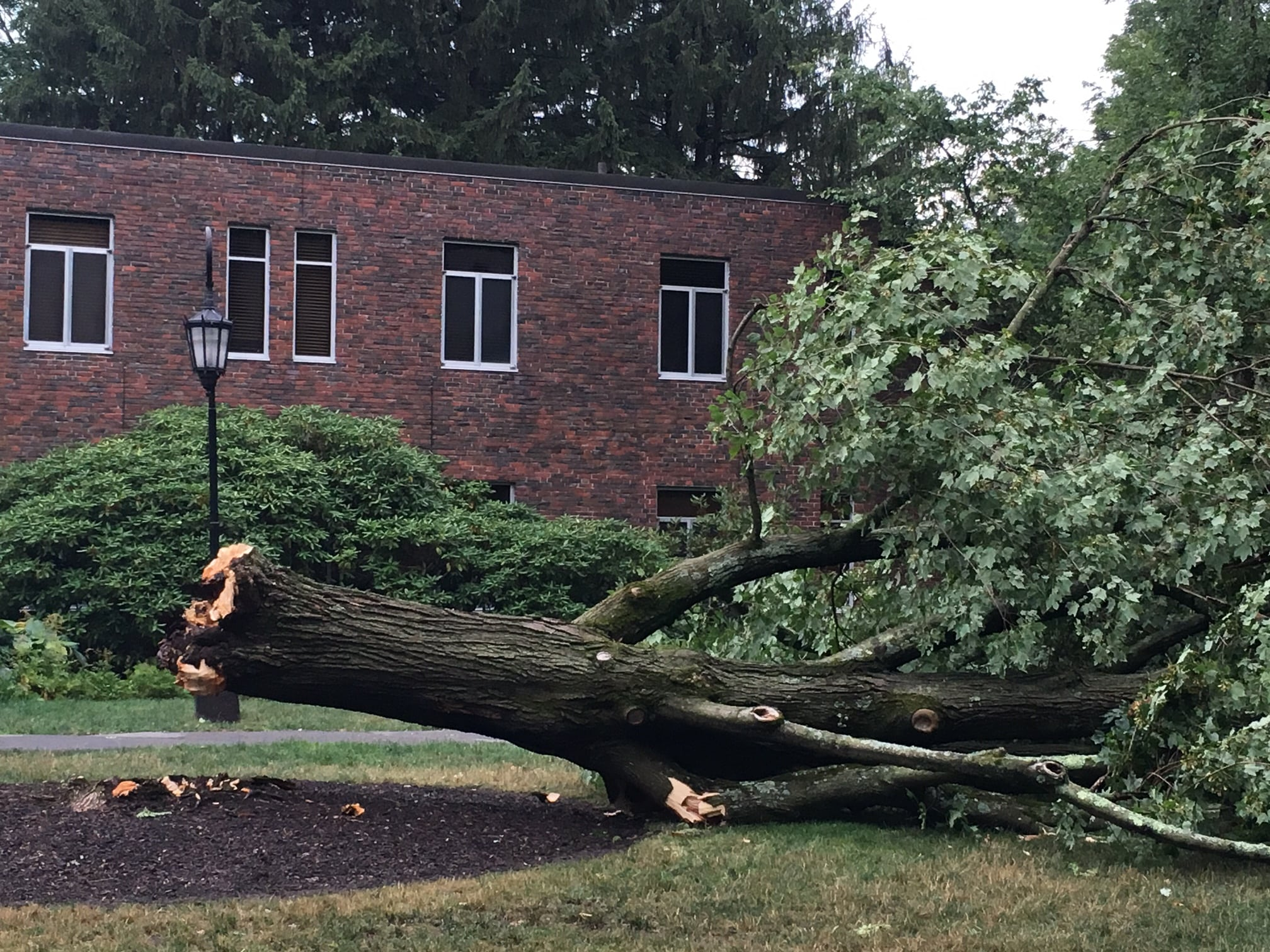 Wellesley College Club, downed tree