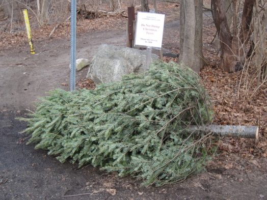 Disposed Christmas tree