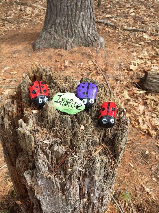Painted rocks in woods near Morses Pond