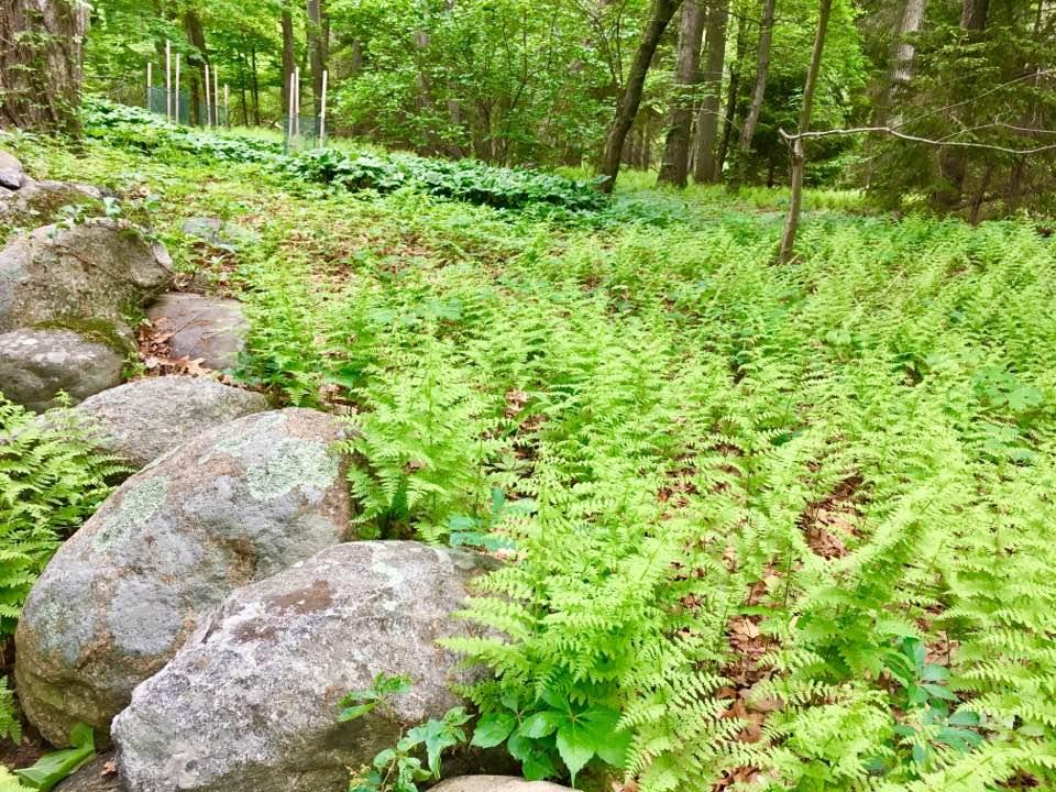 Secret Garden, Wellesley