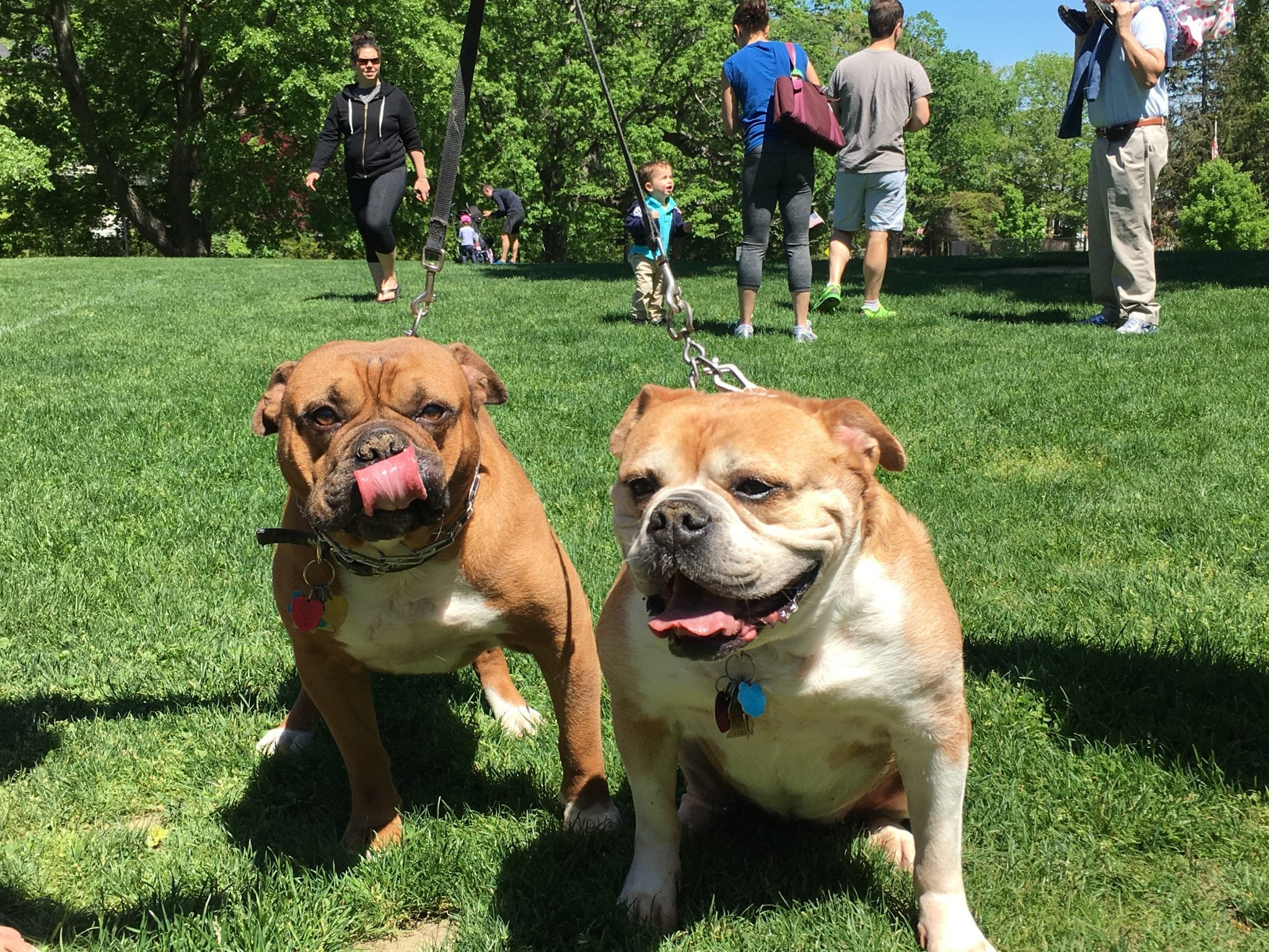 Wellesley's Wonderful Weekend dog contest