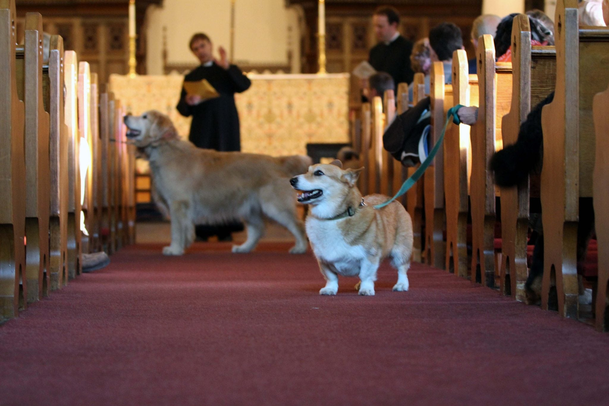 Blessing of the Animals, St. Andrew's in Wellesley
