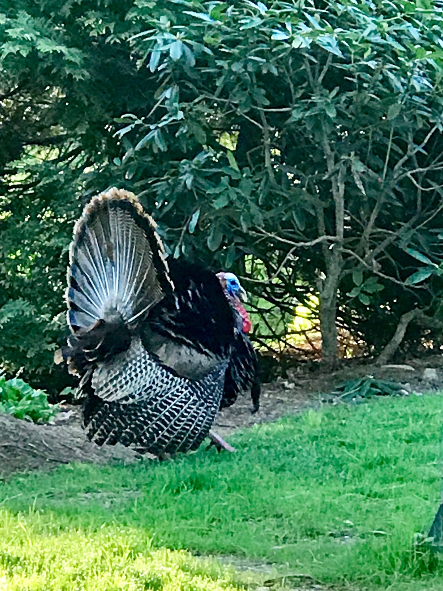 wellesley turkey