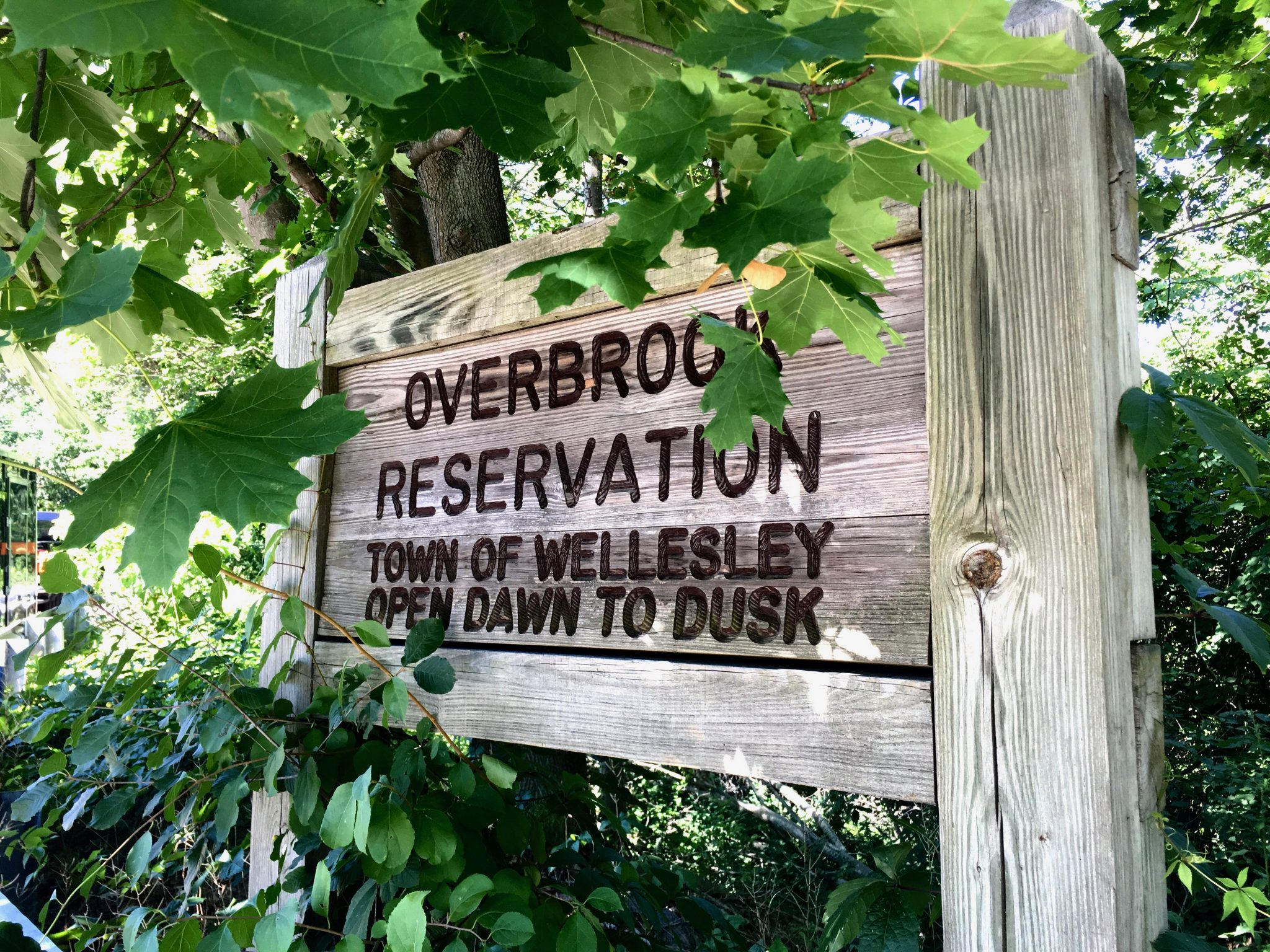 Overbrook Reservation, Wellesley