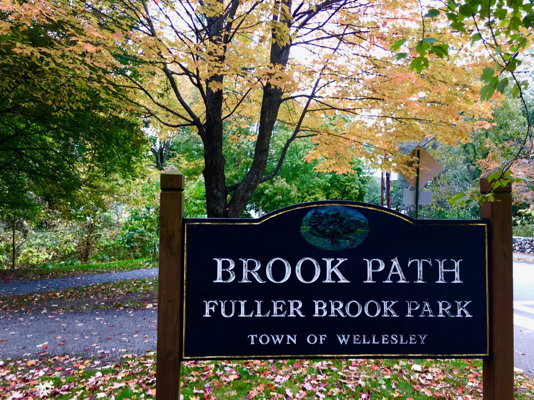 Brook Path, Wellesley, autumn