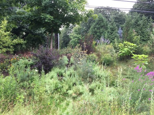 Wellesley High School naturalized garden