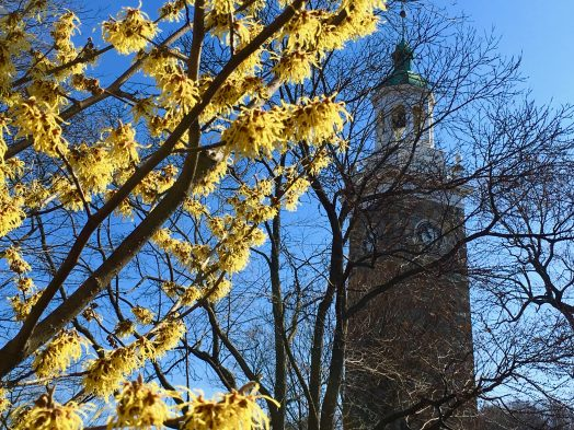 Wellesley Clock Tower, Spring