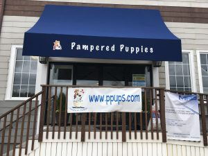 Pampered Puppies, Wellesley
