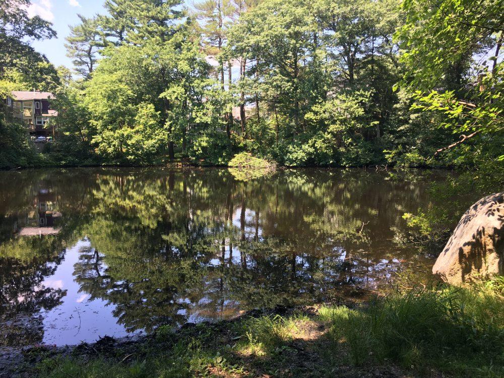 Reeds Pond, Wellesley
