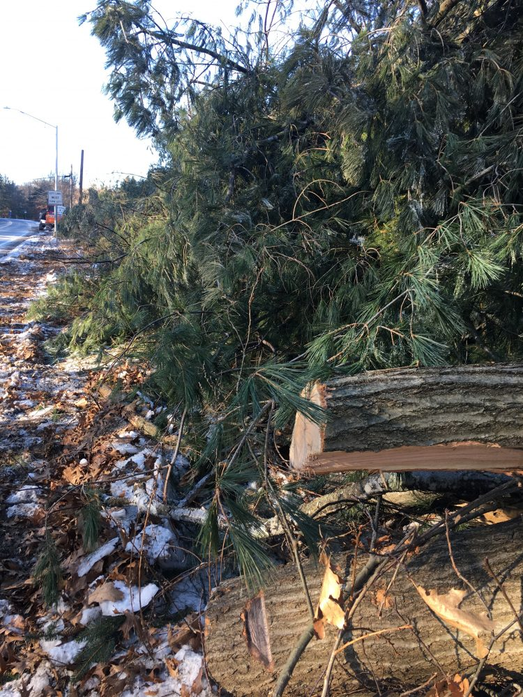 MBTA trees removal, Wellesley tracks