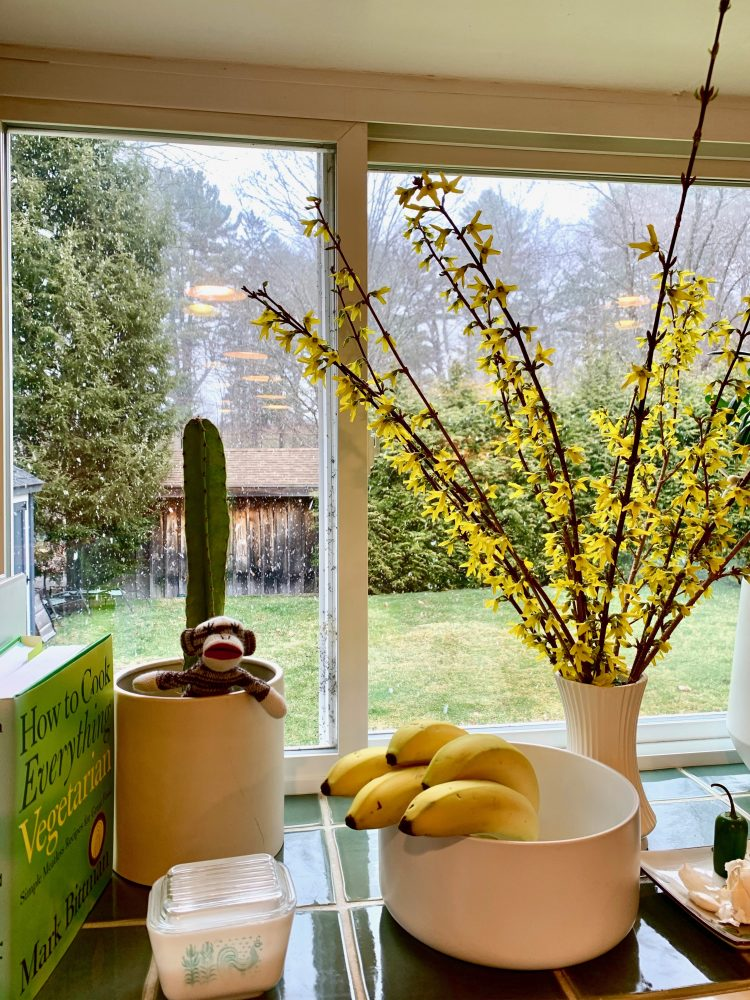 Forcing forsythia, Wellesley