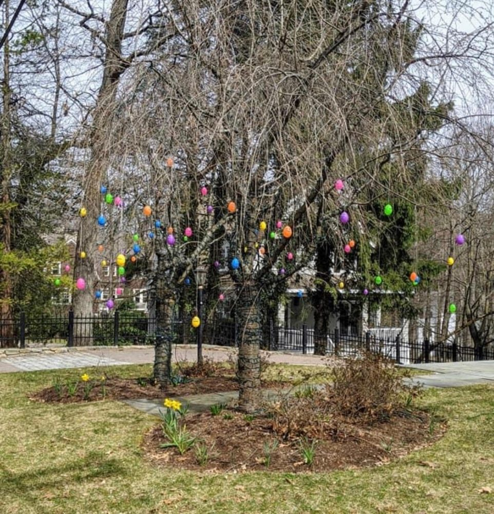 Wellesley Girl Scout Good Egg project