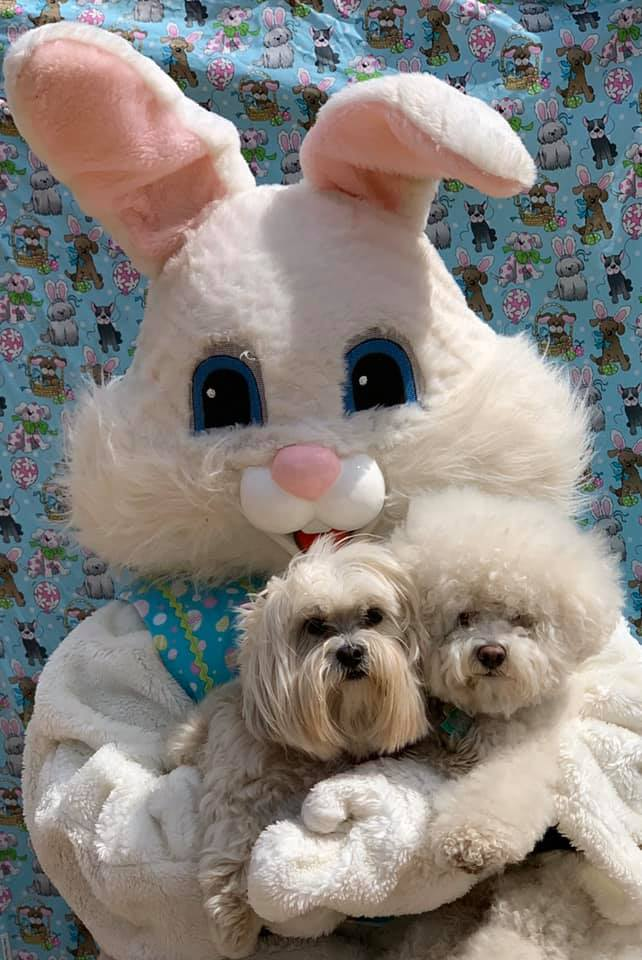 Cooper, the Bichon, and Mocha, the Maltshi (with the Easter Bunny) Photo credit to Doggy Dates