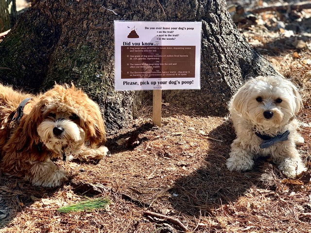 Charley (and his Natick brother from another mother, Manuka) are ambassadors of picking up the poop.