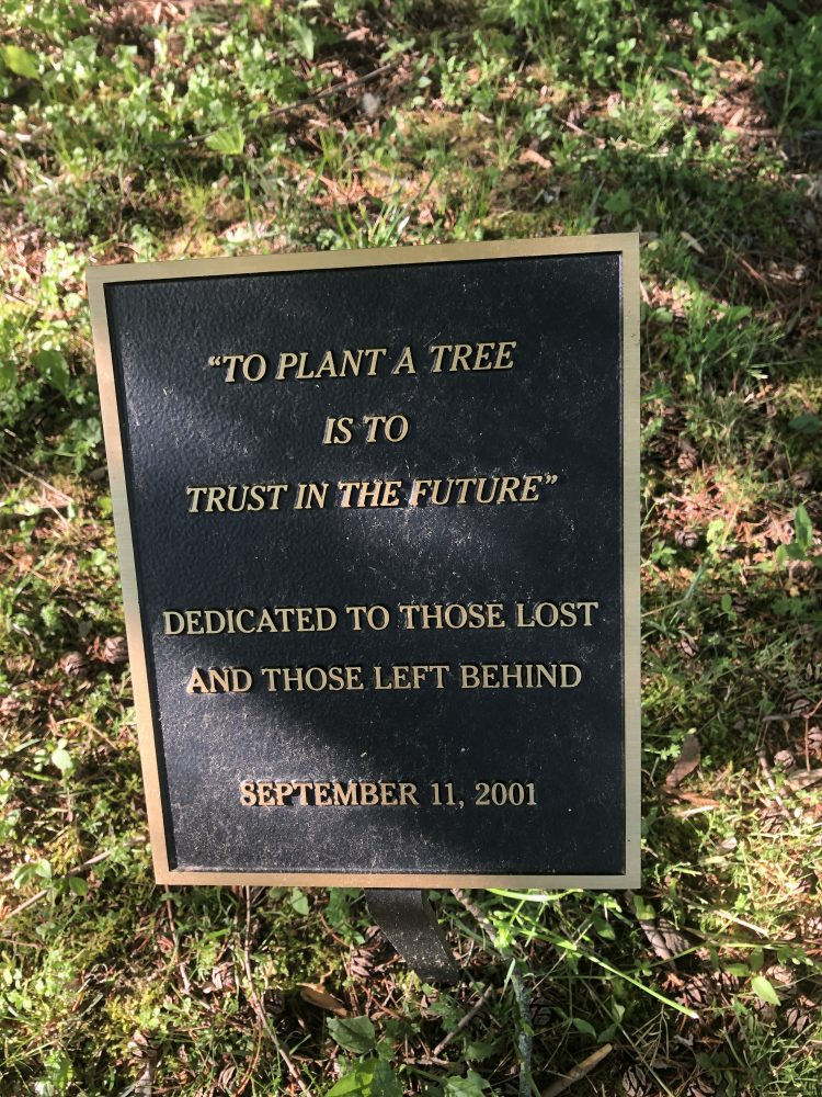 9/11 tree at Simons Park